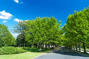 東京都 昭和記念公園の写真素材 [FYI04625298]
