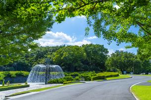 東京都 昭和記念公園の写真素材 [FYI04625306]