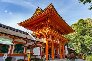 上賀茂神社 天皇陛下御即位を祝う楼門の写真素材 [FYI04625971]