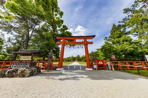 上賀茂神社 快晴の空と新緑に映える一の鳥居の写真素材 [FYI04626000]