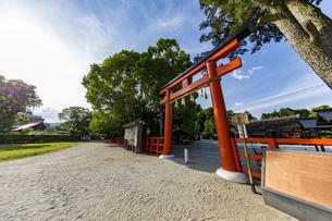 上賀茂神社 快晴の空と新緑に映える二の鳥居の写真素材 [FYI04626001]