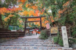 京都 野宮神社の紅葉の写真素材 [FYI04626010]