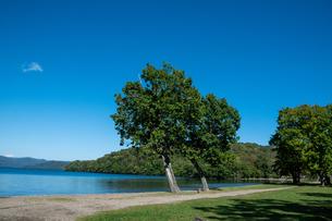青い静かな湖と湖畔の木 屈斜路湖の写真素材 [FYI04626196]