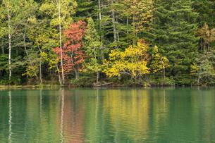 秋の木々を写す湖面 オンネトー湖の写真素材 [FYI04626197]