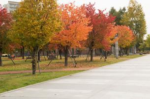 色づいた秋の街路樹の写真素材 [FYI04626198]