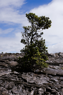 ハワイ島の溶岩の写真素材 [FYI04626512]