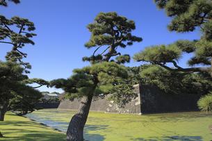 皇居の蛤濠の写真素材 [FYI04626645]