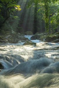 初夏の菊池渓谷の写真素材 [FYI04626886]