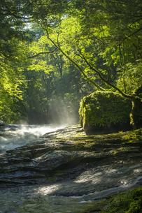 初夏の菊池渓谷の写真素材 [FYI04626888]