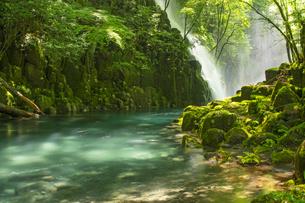 初夏の菊池渓谷の写真素材 [FYI04626896]