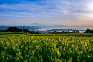 富士山の写真素材 [FYI04627090]