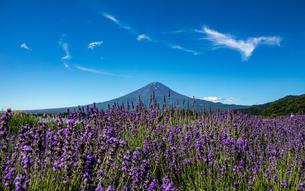 富士山の写真素材 [FYI04627112]