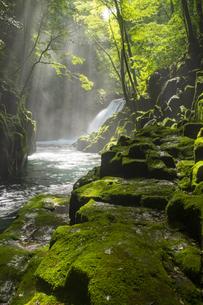 朝の菊池渓谷の写真素材 [FYI04627178]