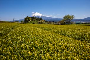 富士山の写真素材 [FYI04627238]