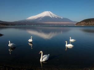 富士山の写真素材 [FYI04627241]