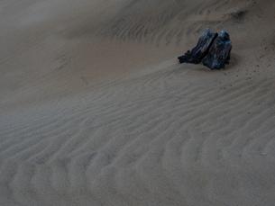 鳥取砂丘の写真素材 [FYI04627274]
