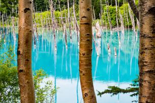 青い池の写真素材 [FYI04627280]