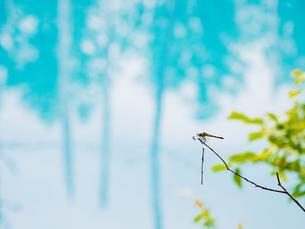 青い池の写真素材 [FYI04627281]