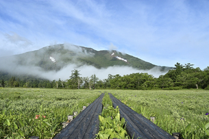 夏の広大な自然風景の写真素材 [FYI04627367]