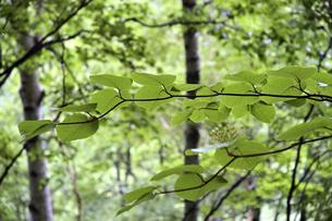 初夏の森の中での自然風景の写真素材 [FYI04627403]