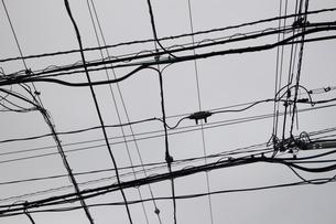 交差する沢山の送電線のモノクロ写真の写真素材 [FYI04627437]