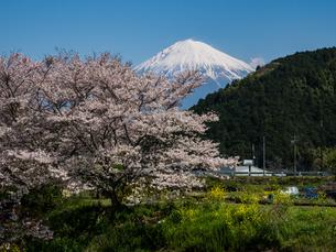 富士山の写真素材 [FYI04627464]