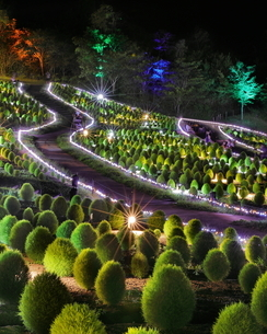 Illuminated of Kochia Hillの写真素材 [FYI04627624]