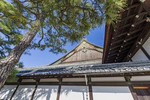 京都二条城 国宝二の丸御殿の写真素材 [FYI04627654]