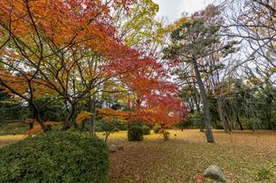 京都二条城 旧石垣側に広がる紅葉の写真素材 [FYI04627659]