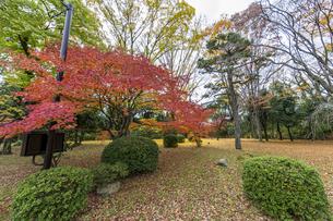 京都二条城 旧石垣側に広がる紅葉の写真素材 [FYI04627660]