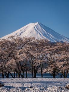 富士山の写真素材 [FYI04627738]