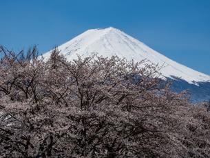 富士山の写真素材 [FYI04627743]