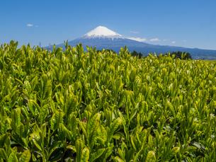 富士山の写真素材 [FYI04627744]
