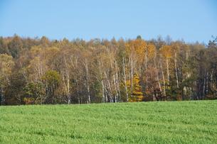 緑の草原と色づいた秋の雑木林の写真素材 [FYI04627782]