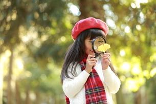 虫眼鏡でいちょうの葉を覗く少女の写真素材 [FYI04627916]