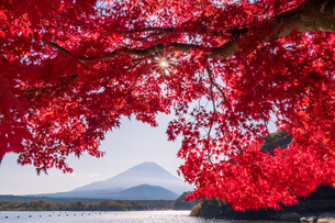 富士山の写真素材 [FYI04628343]
