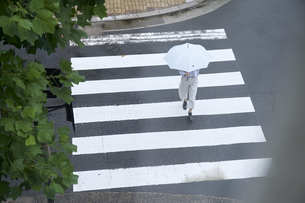 傘をさして横断歩道を渡る女性の写真素材 [FYI04628432]