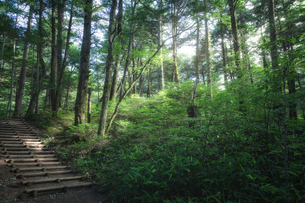 上高地 森林の写真素材 [FYI04628523]