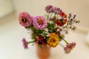 秋の花を部屋に飾るの写真素材 [FYI04628534]