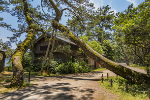 天橋立中腹の空き家と傾く大木の写真素材 [FYI04628567]