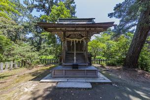 天橋立 松林の中で静かに立つ天橋立神社の写真素材 [FYI04628568]