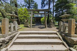 天橋立 松林の中で静かに立つ天橋立神社の写真素材 [FYI04628570]
