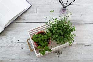 植木鉢に植えたパセリとタイムの写真素材 [FYI04628703]