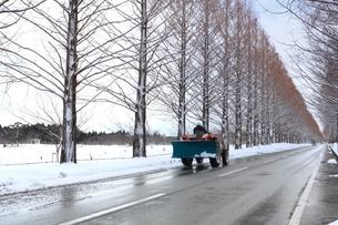冬のメタセコイヤ並木の写真素材 [FYI04628708]