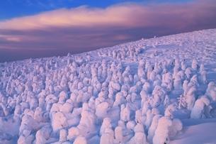 蔵王の樹氷ライトアップの写真素材 [FYI04628719]
