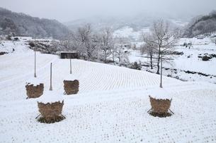 雪景色の飛鳥の写真素材 [FYI04628730]