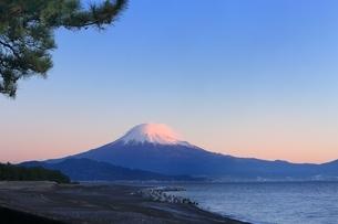 三保の松原と富士山の写真素材 [FYI04628817]