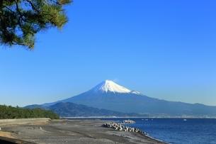 三保の松原と富士山の写真素材 [FYI04628818]