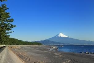 三保の松原と富士山の写真素材 [FYI04628819]