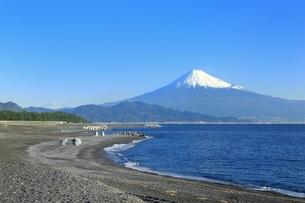 三保の松原と富士山の写真素材 [FYI04628820]